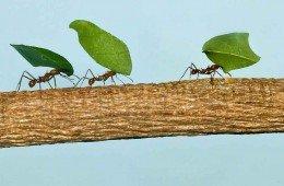 Formiche e termiti, la vita
