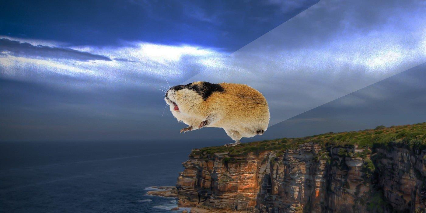 I lemming e la leggenda del suicidio di massa