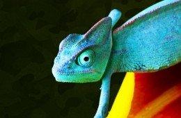 Il mimetismo nel regno animale