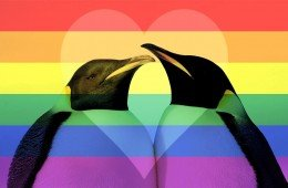animali-gay-pinguini