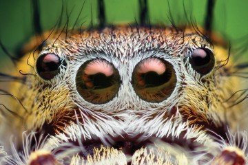 spiders mostra ragni a genova