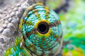 gli occhi più strani degli animali