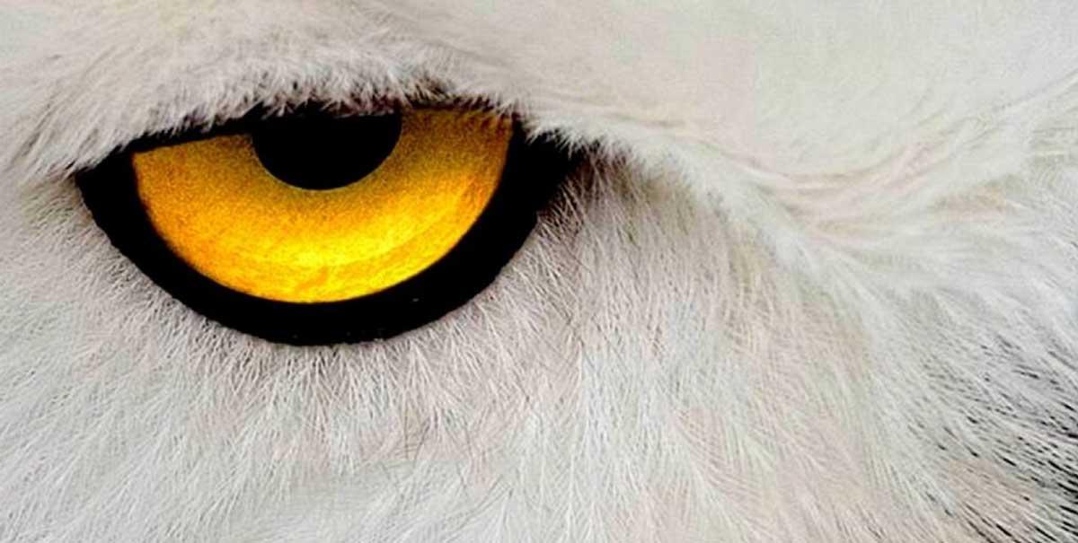 occhi di animali