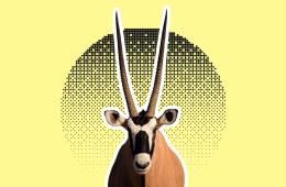 animali con corna