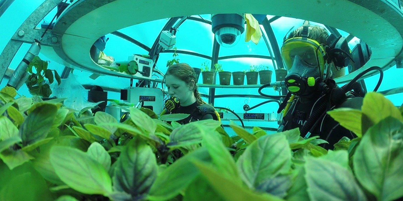 Coltivare basilico in fondo al mare il progetto for Coltivare il basilico