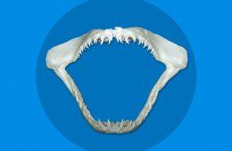 denti animali pericolosi